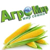 "ООО ""АгроМир-Сидс"" - производство семян кукурузы и пшеницы"
