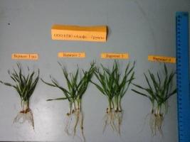 О технологии антистрессового высокоурожайного земледелия
