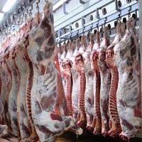 Производство и оптовые продажи мяса в ассортименте