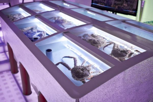 Устричный аквариум витрина.