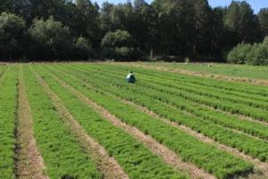 Приятные скидки на предзаказ растений в компании «АРТ-Ландшафт»